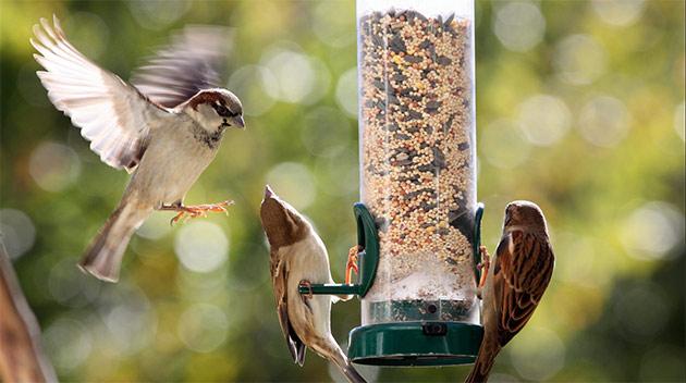 "Počinje takmičenje ""Ptice moje hranilice"""