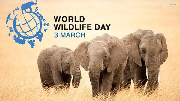 svetski-dan-divljih-vrsta